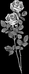 Роза в картинках береза