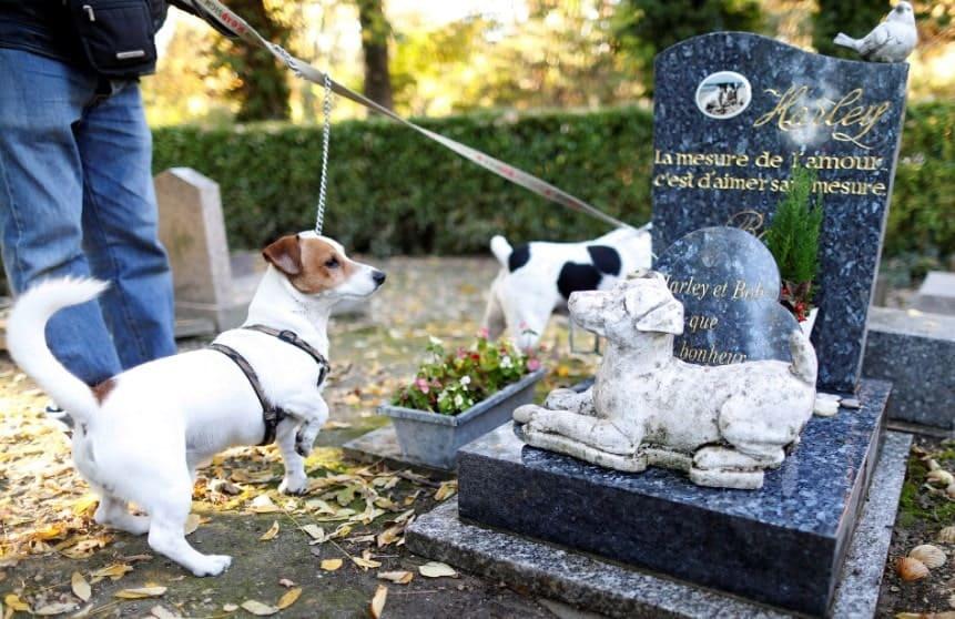 Где похоронить собаку